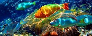 Paysage sous-marin dans la mer des Caraïbes avec banc de poissons colorés dans un récif de corail en bonne santé, Riviera Maya, Mexique