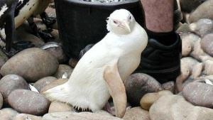 1475430064_396_los-7-animales-albinos-mas-famosos