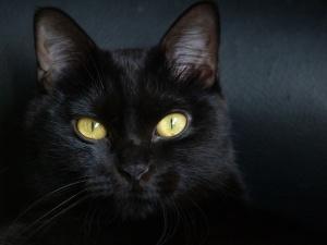gato20negro