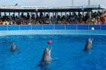 delfinari