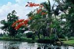 flora-cuba