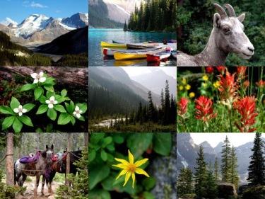 Resultat d'imatges de flora canadà
