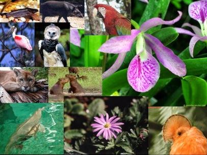 Resultat d'imatges de flora i fauna equador