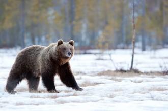 Resultado de imagen de fauna finlandia