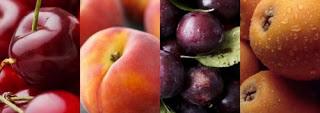 https://lesbarraquesdigitals.files.wordpress.com/2019/05/f4fc5-frutas-de-temporada-portada_500x300.jpg